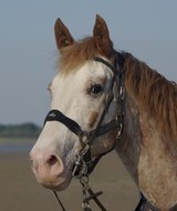 equusfred